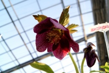 ガーデニング福岡県元気で活きの良い植物専門店オニヅカバイオシステム