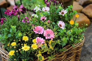 【3月の園芸教室】開催。