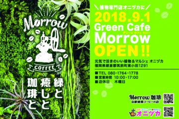 Green Cafe Morrow OPEN